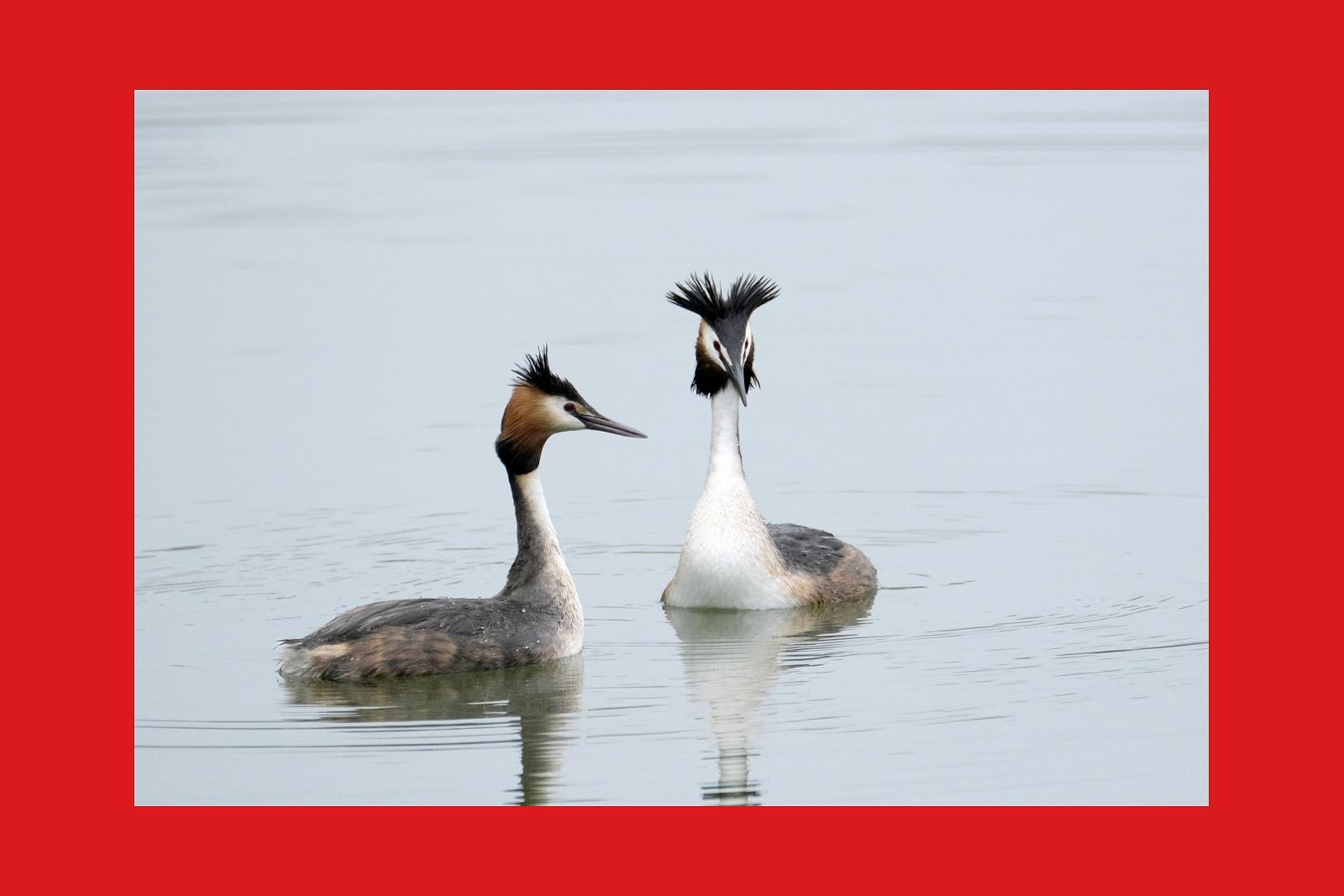 uccelli  nelle oasi