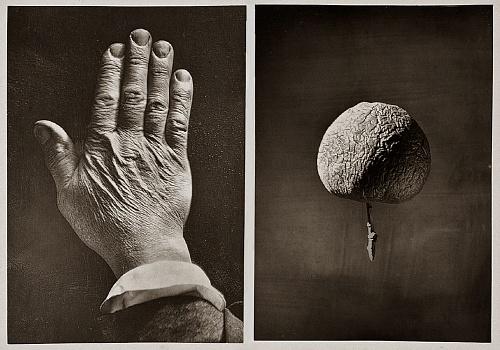 James Hall Nasmyth: Hand & Apple, 1874